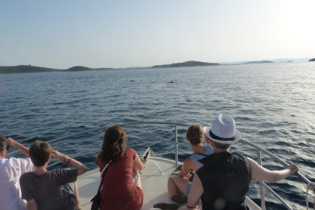 Dolphin watching Tour-Murter